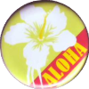Aloha Elderflower